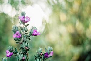 lila blommor i trädgården foto