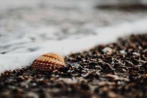 snäckskal på stenig strand foto