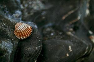 snäckskal på svarta sandiga stenar foto