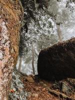 bergformation med träd foto