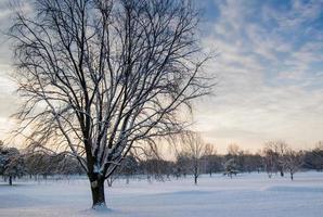träd täckt av snö foto