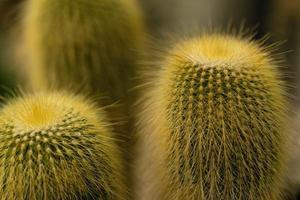 grön kaktusväxt foto