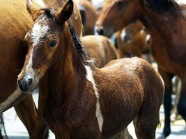 grupp hästar foto