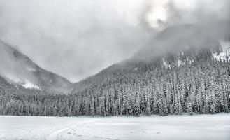 snöiga träd täckta berg foto