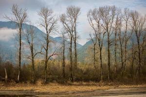 träd med berg i bakgrunden
