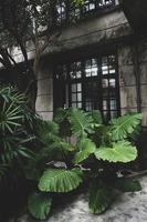 stor uteplats trädgård foto