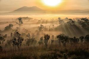 solnedgång över dimmig skog