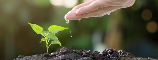 närbild av händer som vattnar unga träd på jord foto