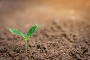 växt spira från jord foto