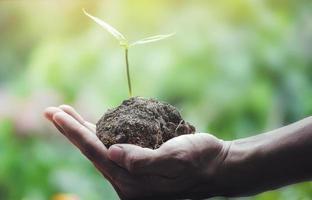 en hand som håller plantor på naturlig grön bakgrund foto