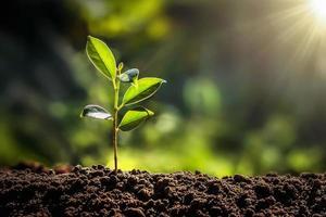 litet träd som växer med solsken i trädgården foto