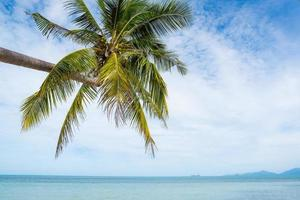 tropisk strand med palmträd foto
