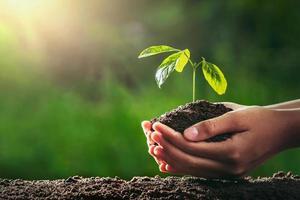 händer som håller det lilla trädet som ska planteras foto