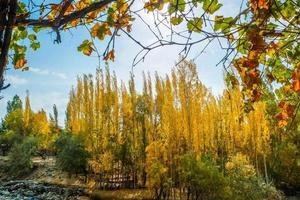 landskapsvy av shigarskog och blad i höst, Pakistan foto