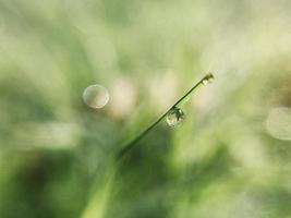 vattendroppe på gräs foto