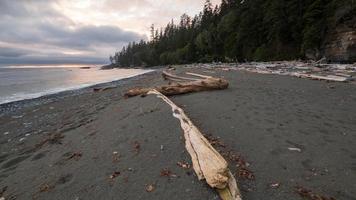 brun trä logg på stranden
