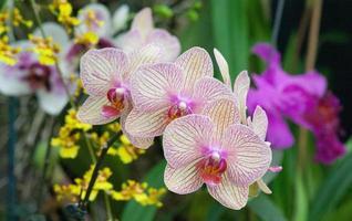blommor i en trädgård foto