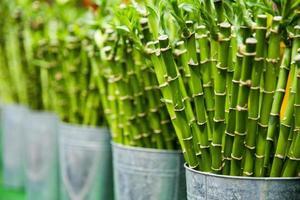 rader av bambustickor i hinkar