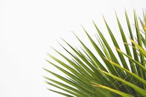 gröna växtblad