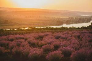 ett fält av lavendel nära bäcken foto