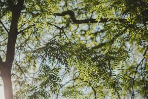 tittar upp på trädgrenar foto