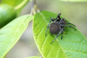närbild av spindel på blad foto