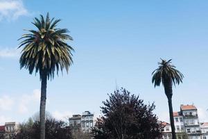 två palmer foto