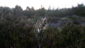 växt med spindelnät foto