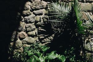 grön palmträd foto