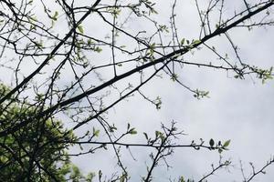 grönt blad kala träd foto