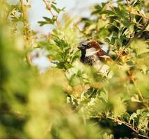 vit och brun fågel foto