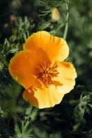 gul blomma i solen foto