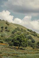 gröna kullar under blå moln