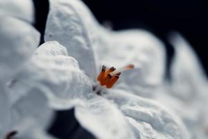 vit blomma på svart bakgrund foto