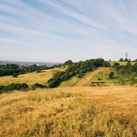 grönt gräs fält
