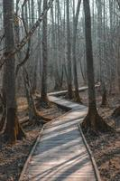 tomt spår i skogen foto