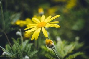 gul blomma i blom foto
