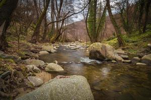 flödande flod i skogen foto