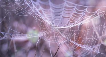 närbild av spindelnät