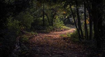 skog på dagtid