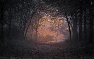skog under gryningen foto
