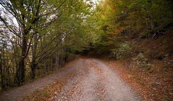 skogsväg under dagen foto