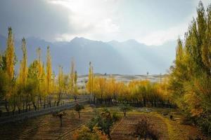 solbelysta färgglada poppelträd foto