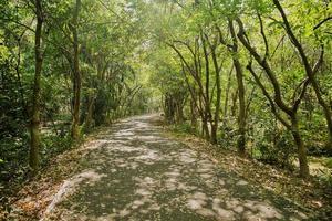 skuggig gångväg i frodig grön skog foto