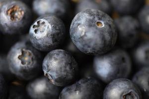 färska blåbär i makro