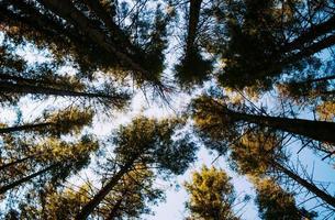 gröna träd under blå himmel