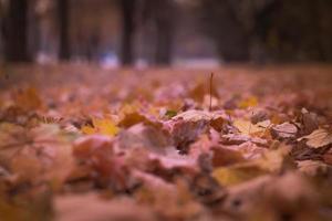 torkade löv på bottenvåningen foto