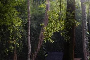 morgonsolljus i den tropiska skogen foto