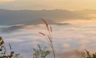 landskap gräs och morgondimma foto