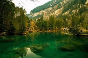 klart grönt vatten under skogen